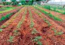 El cambio climático crea cultivos con menos nutrientes