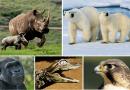 Los detalles más importantes de los animales vertebrados