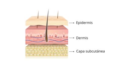 ¿Cuáles son las características de la piel?