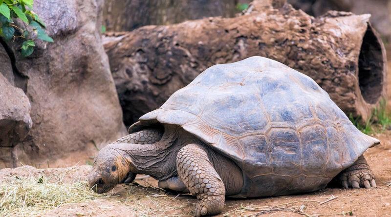 Animales Extintos-Tortuga